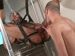 Cock sucked & ass fisted