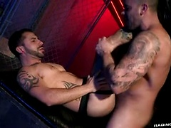 Raging Stallion - Damien Crosse & Nick Cross